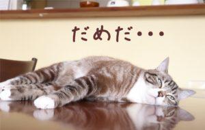 やるきがない猫